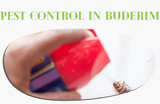 Pest Control Services In Buderim